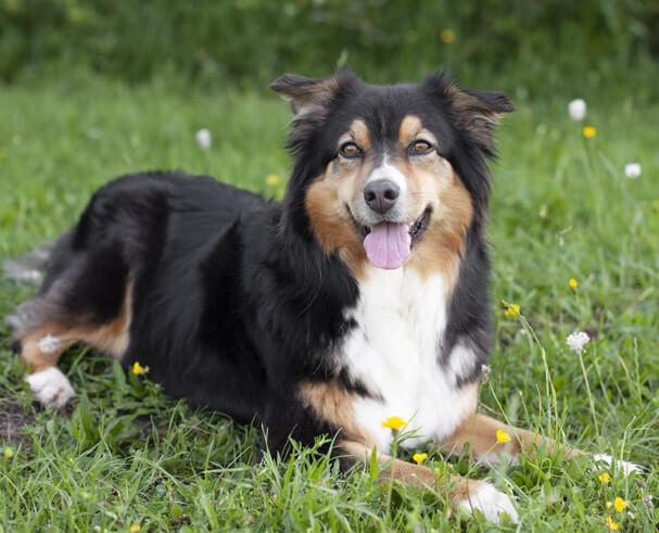 Hund Lucy